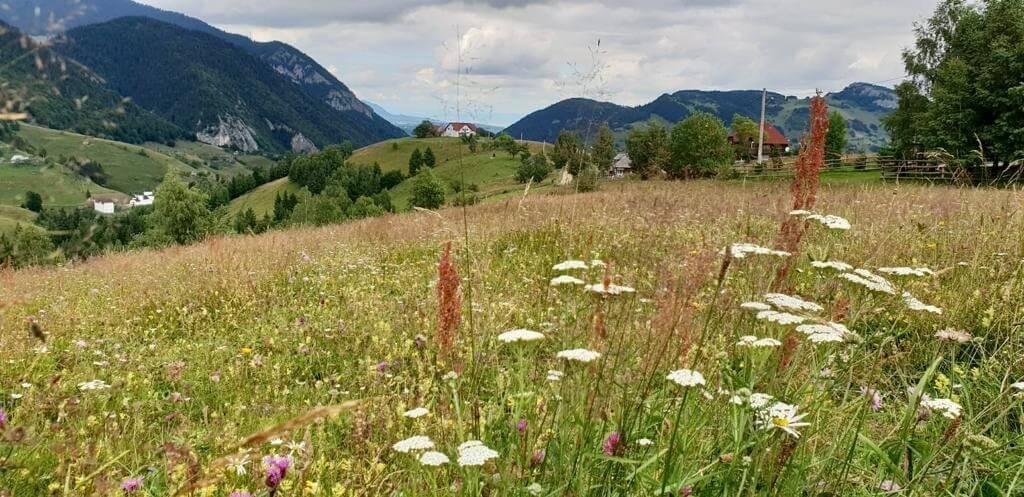 כפר מגורא ברומניה