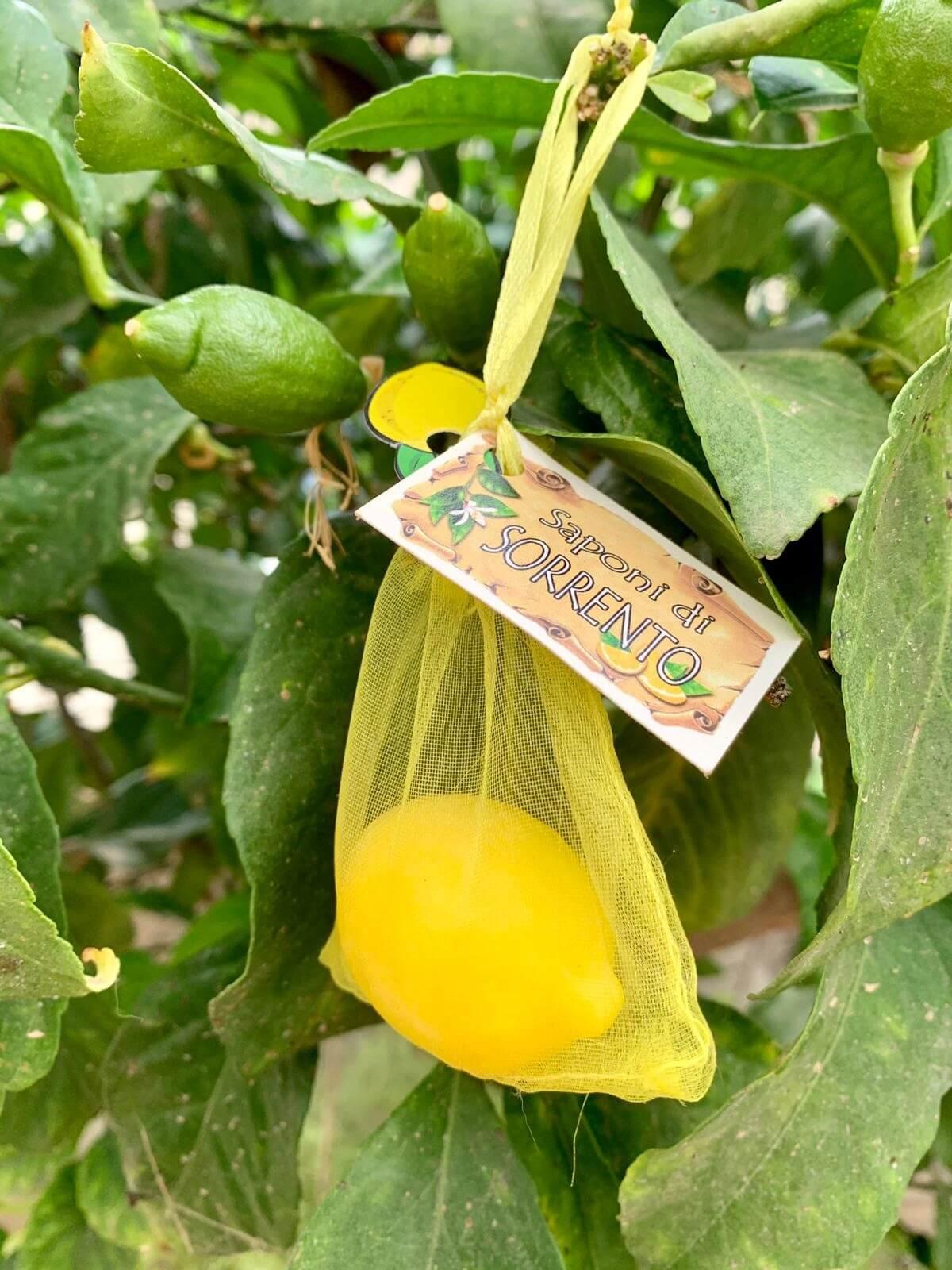סבוני לימון ריחניים מסורנטו