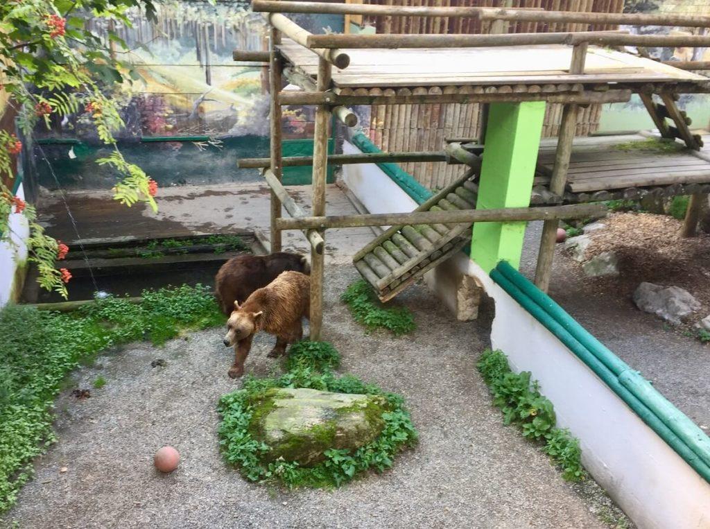 דובים חומים בפארק חיות הבר פרלשטיין