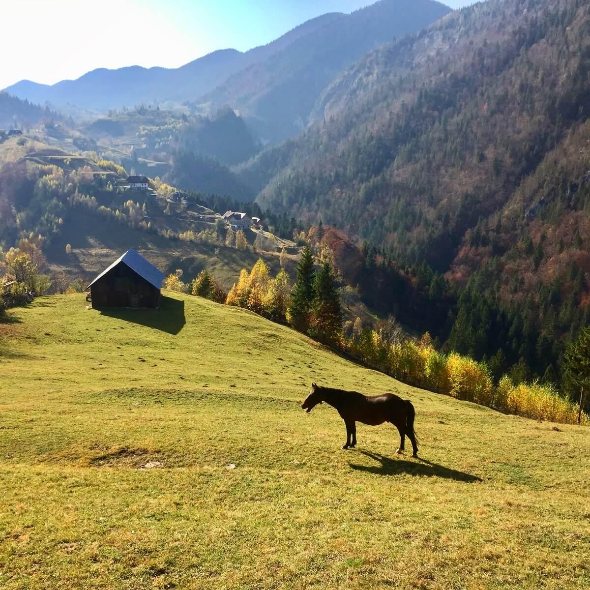 נוף מהכפר מגורא