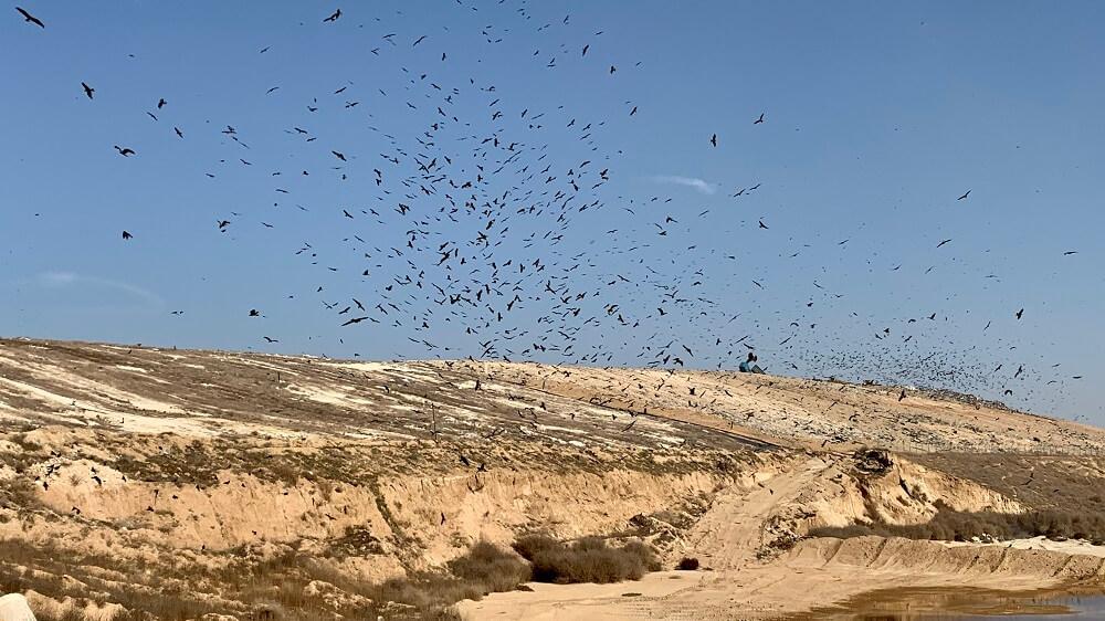 עופות מעל אתר דודאים