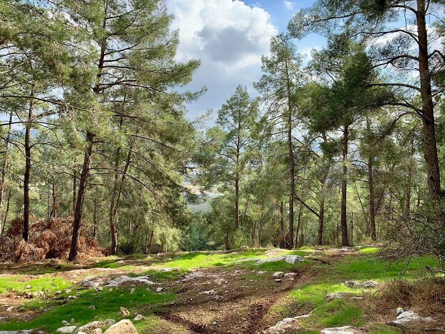 טיולים בירושלים והסביבה